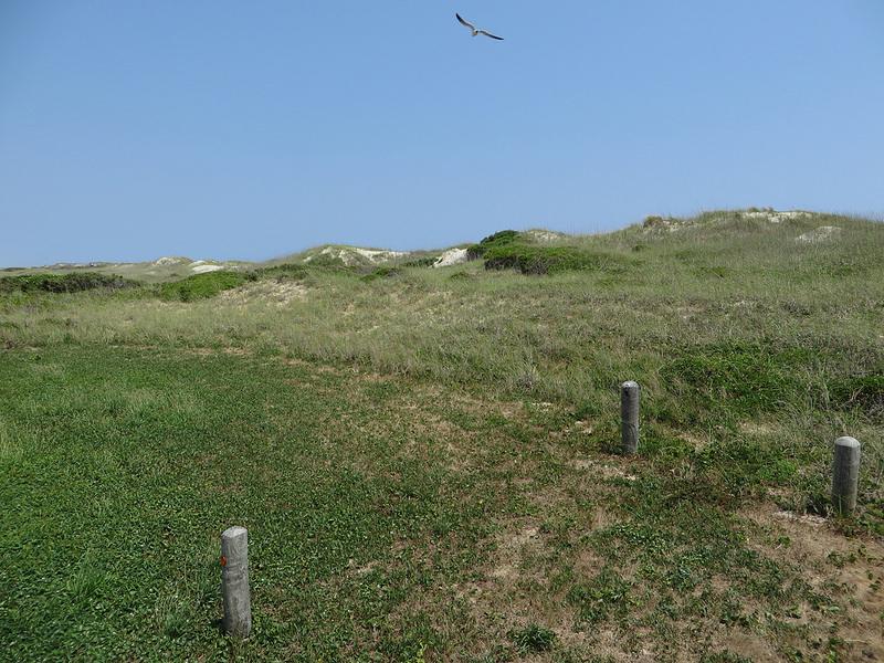 カリフォルニア湾の島々と保護地域群の画像7