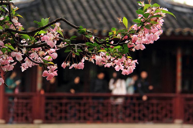 蘇州古典園林の画像4