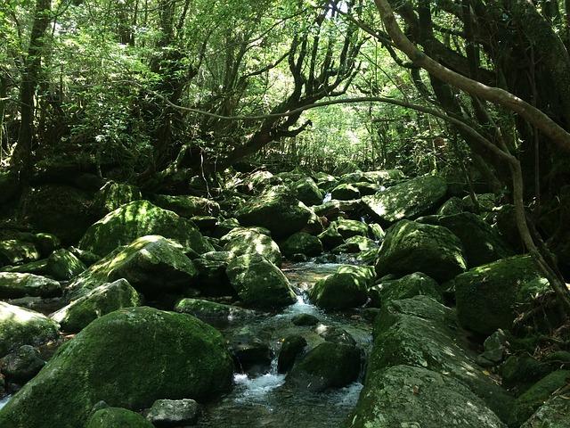 屋久島の画像1