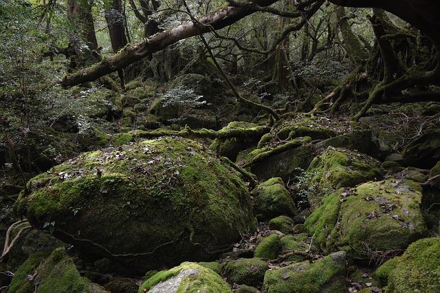 屋久島の画像6