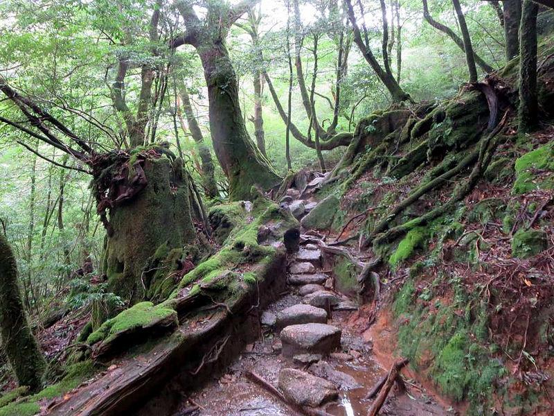 屋久島の画像12