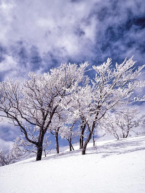 白神山地の画像3