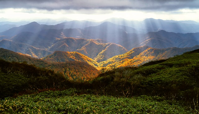 白神山地の画像1