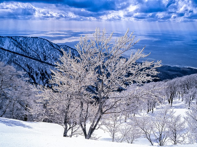 白神山地の画像9