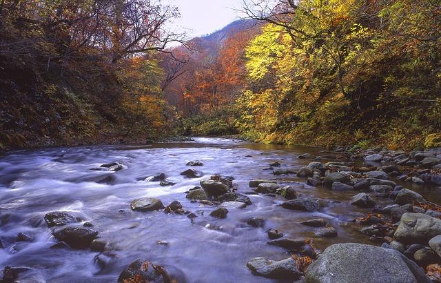 白神山地の画像11