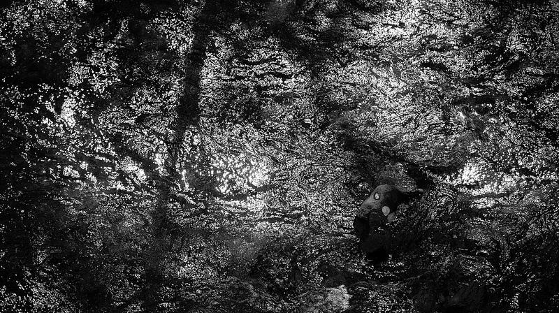 白神山地の画像17