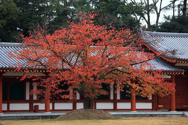 古都奈良の文化財の画像6