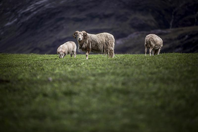 クジャタア・グリーンランド:氷帽周縁部におけるノース人とイヌイットの農業地域の画像10