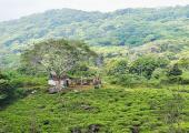 https://world-heritage.s3-ap-northeast-1.amazonaws.com/img/1493765224_imgF1491934221_25648608072_c49fd9e473_c.jpg
